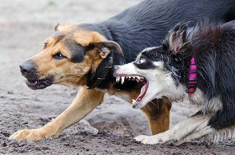 Больше двух тысяч брянцев в этом году пожаловались на укусы животных