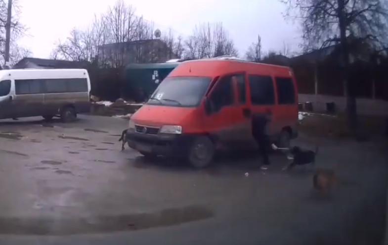 Битва маршрутчика с бродячими собаками в Брянске попала на видео