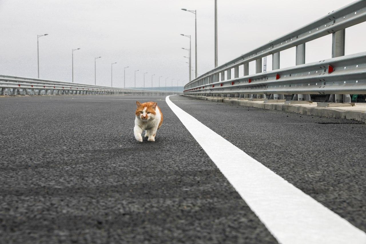 Мостик открыл Крымский мост