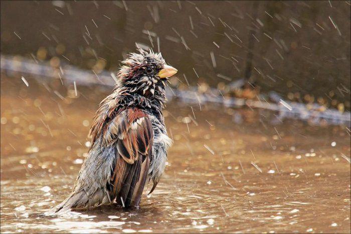 В воскресенье брянцам обещают дождь с грозой