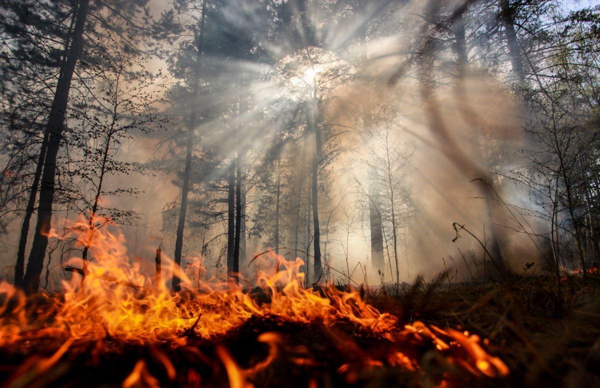 В Брянском районе 2 часа тушили лесной пожар