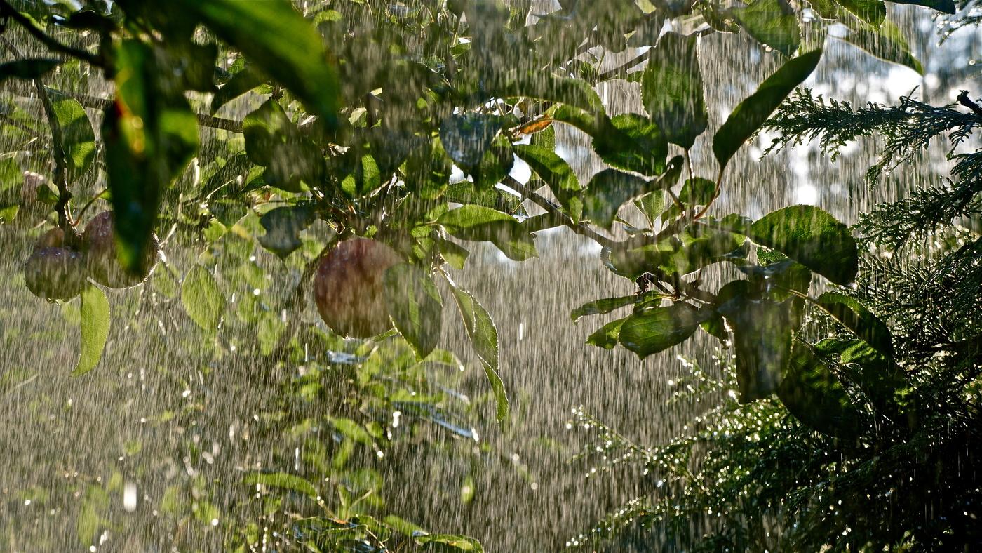 Лето попрощается с Брянском дождем