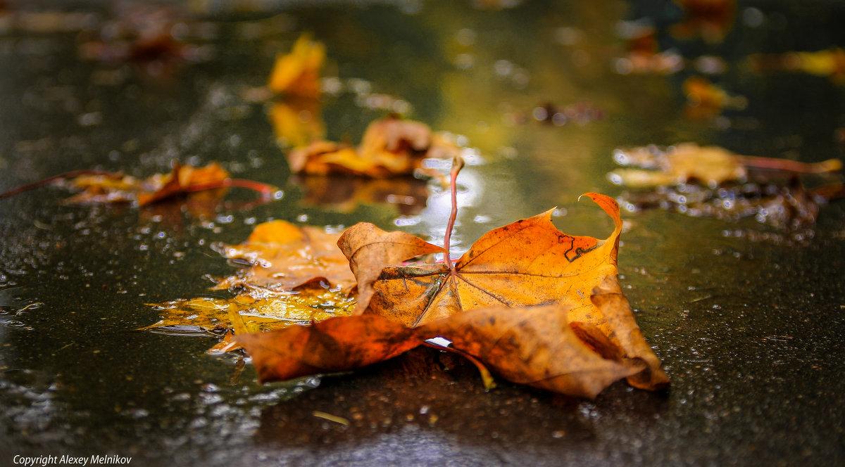 В четверг в Брянске возможен дождь