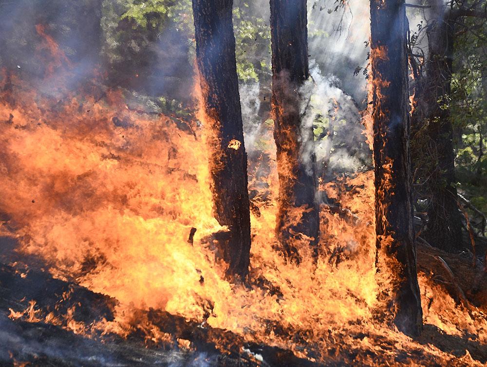Лесные пожары терзают Брянскую область