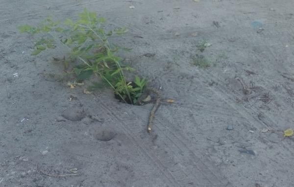 В Брянске пожаловались на двухметровую яму