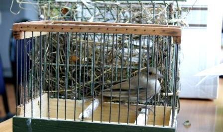 Через Брянск не пустили мясо и декоративных птиц