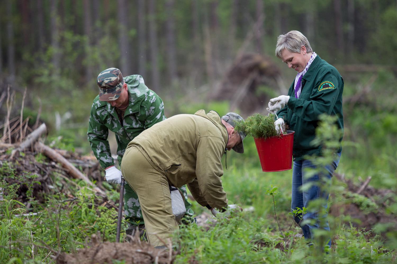 В Брянской области объявили о старте акции «Живи, лес!»
