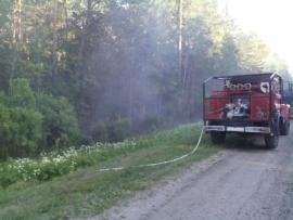В Брянском районе пожарные тушили сегодня лесную подстилку