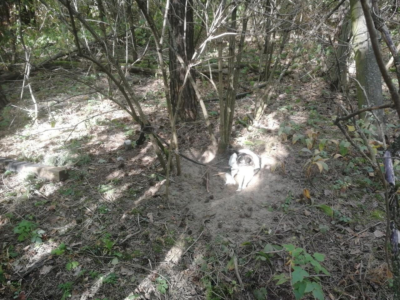В брянском лесу хозяева бросили собаку на верную смерть