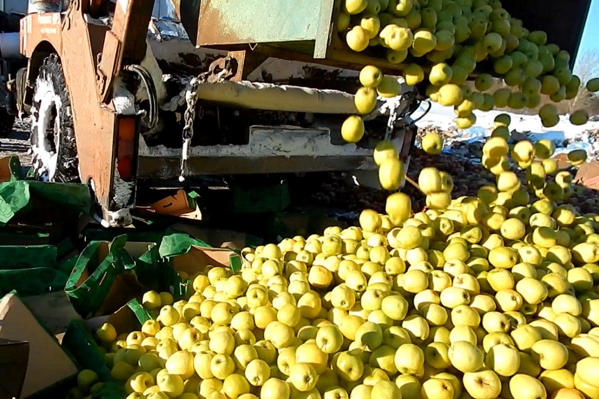 17 тонн непонятных груш раздавили на Брянщине