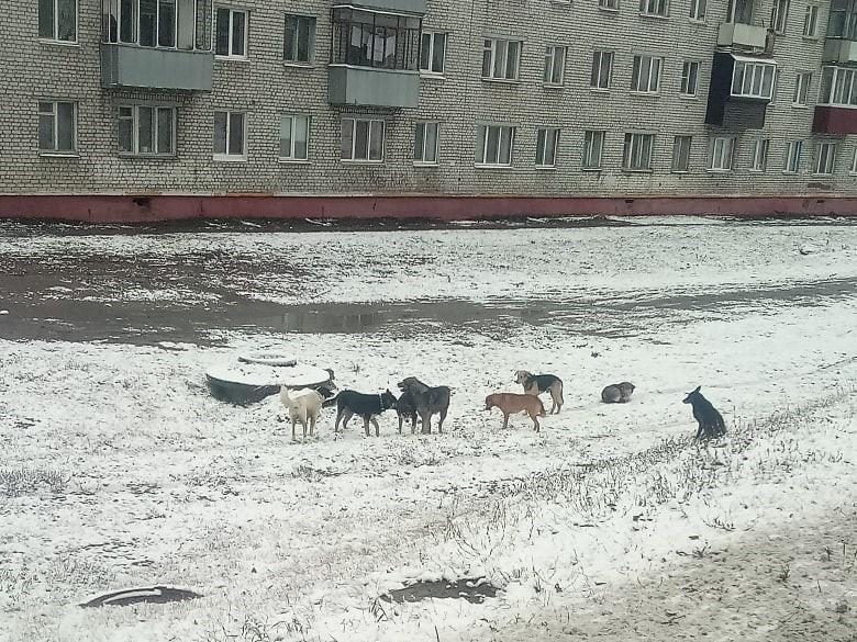 Брянцев опять разделила стая собак