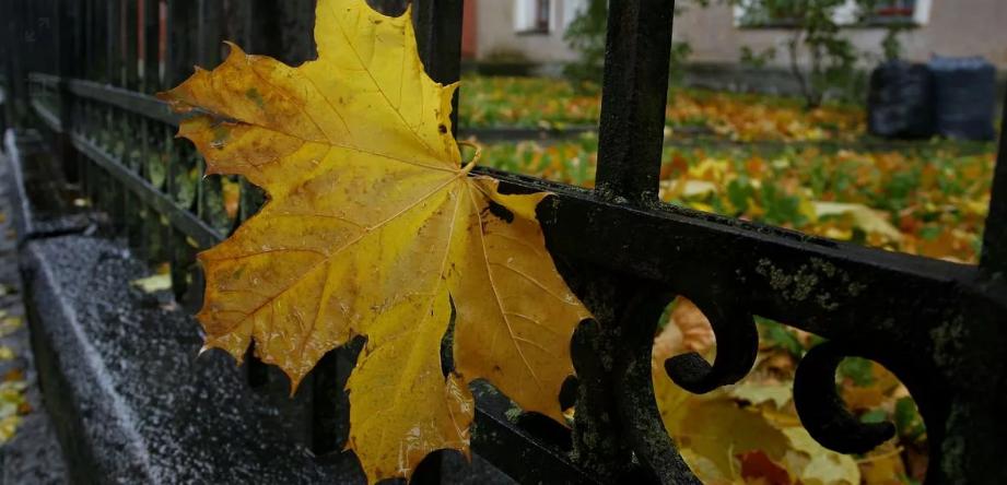 Завтра Брянск снова окажется во власти тумана
