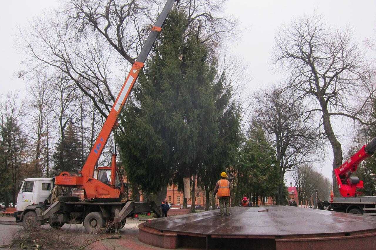 В Брянске установили главную новогоднюю ель