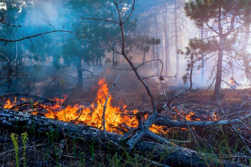 Под Брянском этим вечером тушили лес