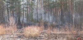 Под Навлей сегодня тушили лес