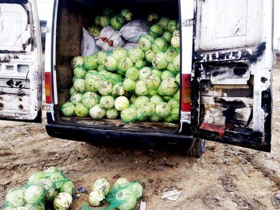 3 тонны капусты раздавили в области