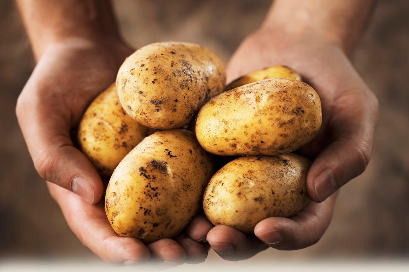 Брнская область по-прежнему славится картофелем