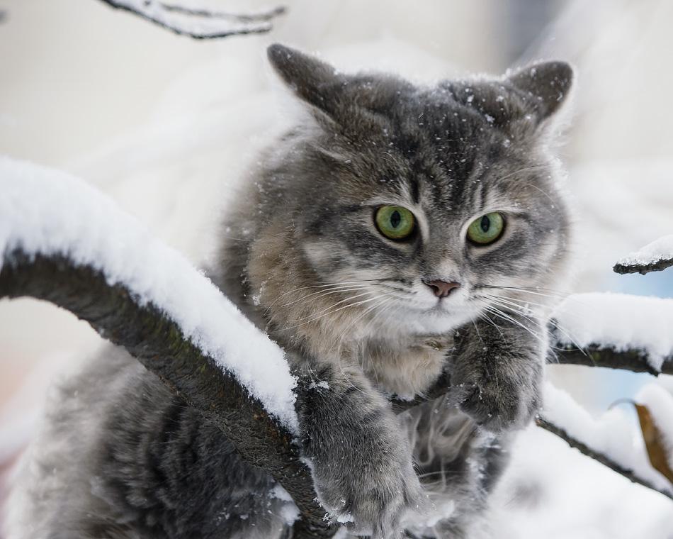 Брянцам предложили снимать котенка с дерева платной автовышкой