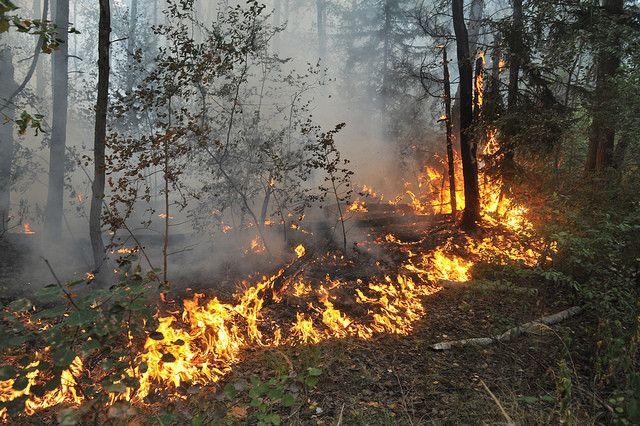В Клетнянский район сегодня выезжали огнеборцы
