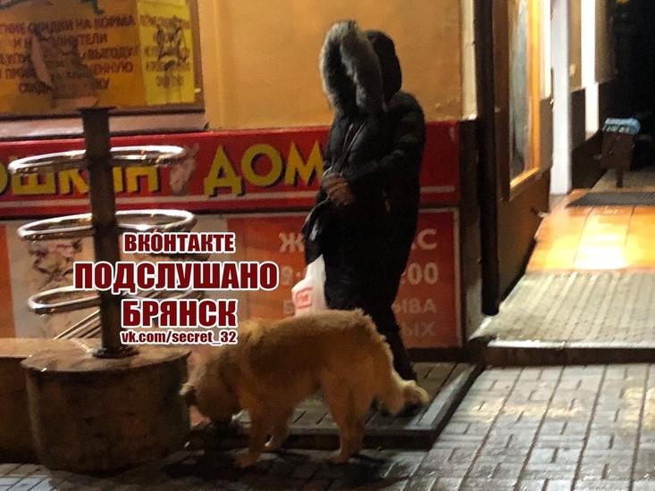 Брянцев умилила женщина, кормящая бездомного пса