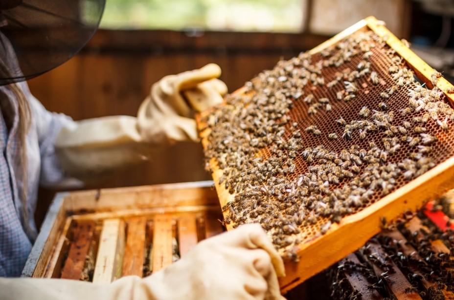 Брянские парламентарии позаботились о пчеловодах