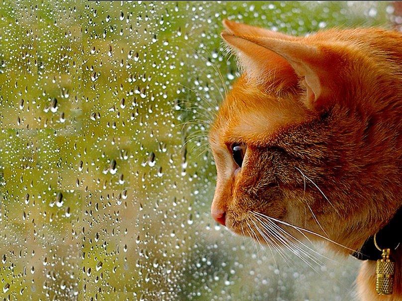 В воскресенье в Брянске тепло и дождливо