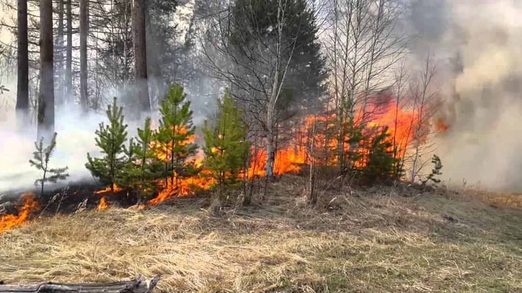 В Снежетьском лесничестве сегодня горел лес