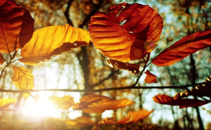 В четверг в Брянске будет тепло и солнечно