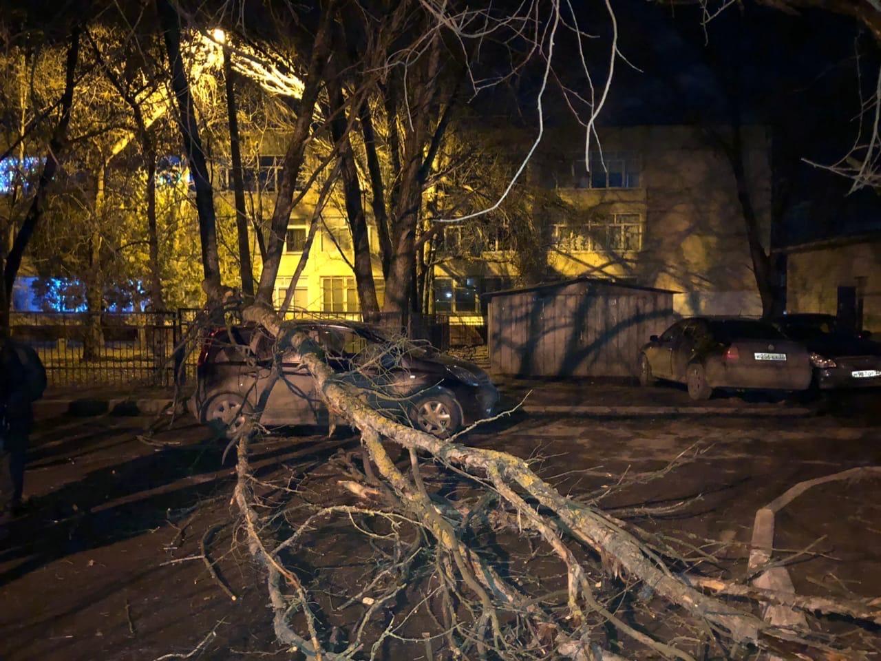 Дерево у школы №60 в Брянске разбило автомобиль