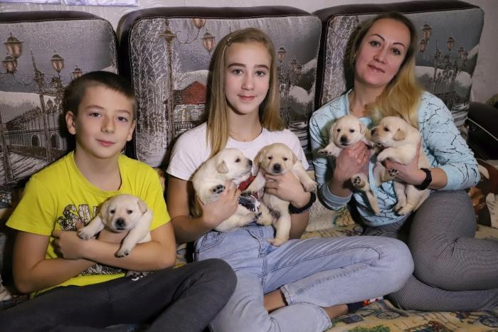 Восемь щенков родила лабрадор Марго, подаренная президентом школьнице из Клинцов