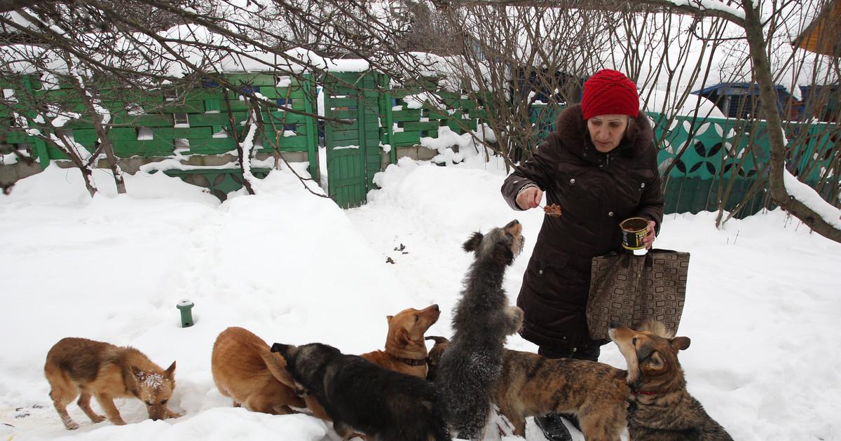 Любителей кормить бродячих животных брянец хочет наказать...рублем