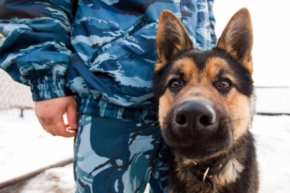 Мопед в Дятьково нашла служебная собака