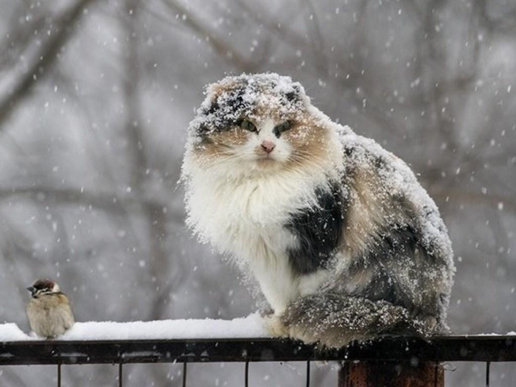 В субботу в Брянске снег с дождем