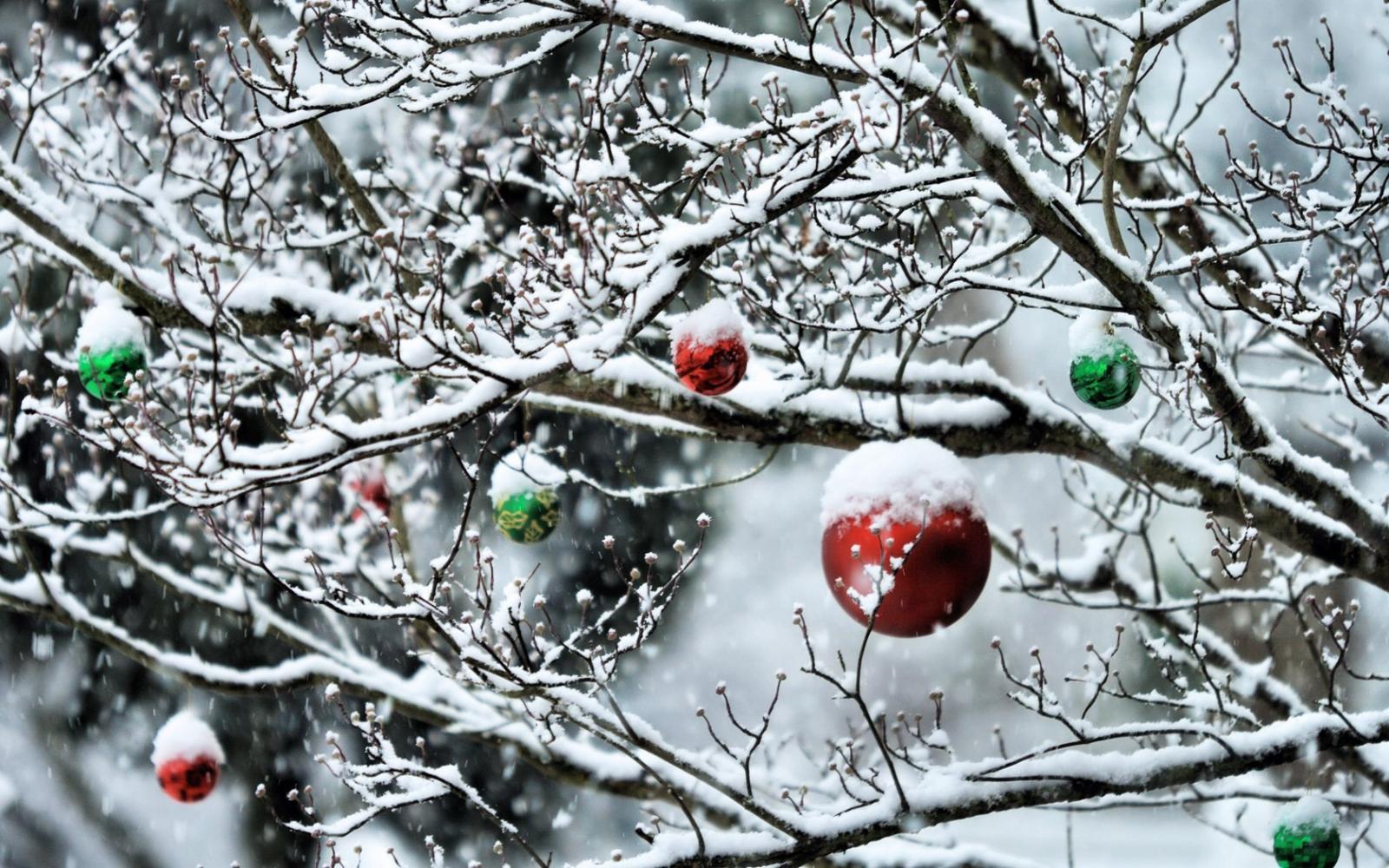 Почти новогодняя погода завтра ожидает брянцев