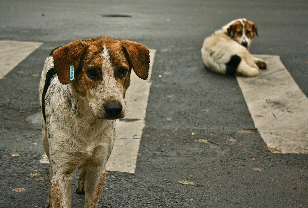 700 раз в этом году бездомные псы нападали на брянцев