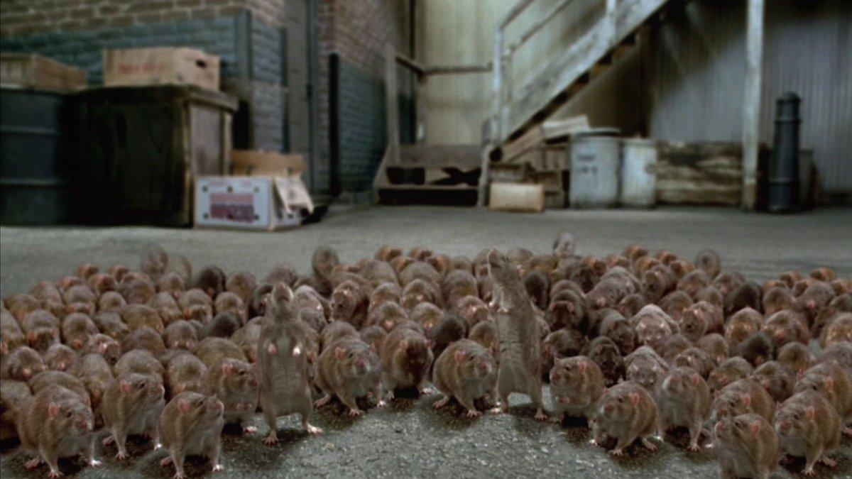 Полчища крыс соседствуют в Брянске с детским садом