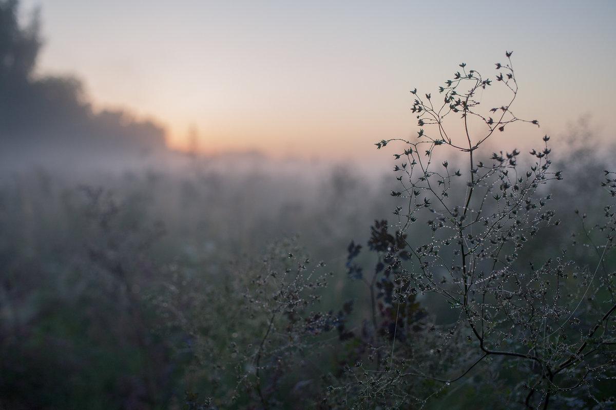 В четверг в Брянске ожидается туман