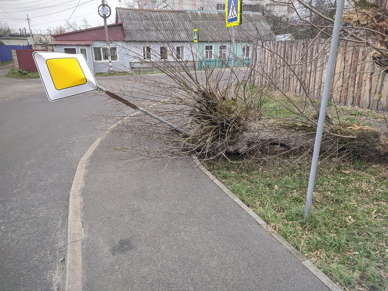 В Брянске дерево завалило дорожный знак