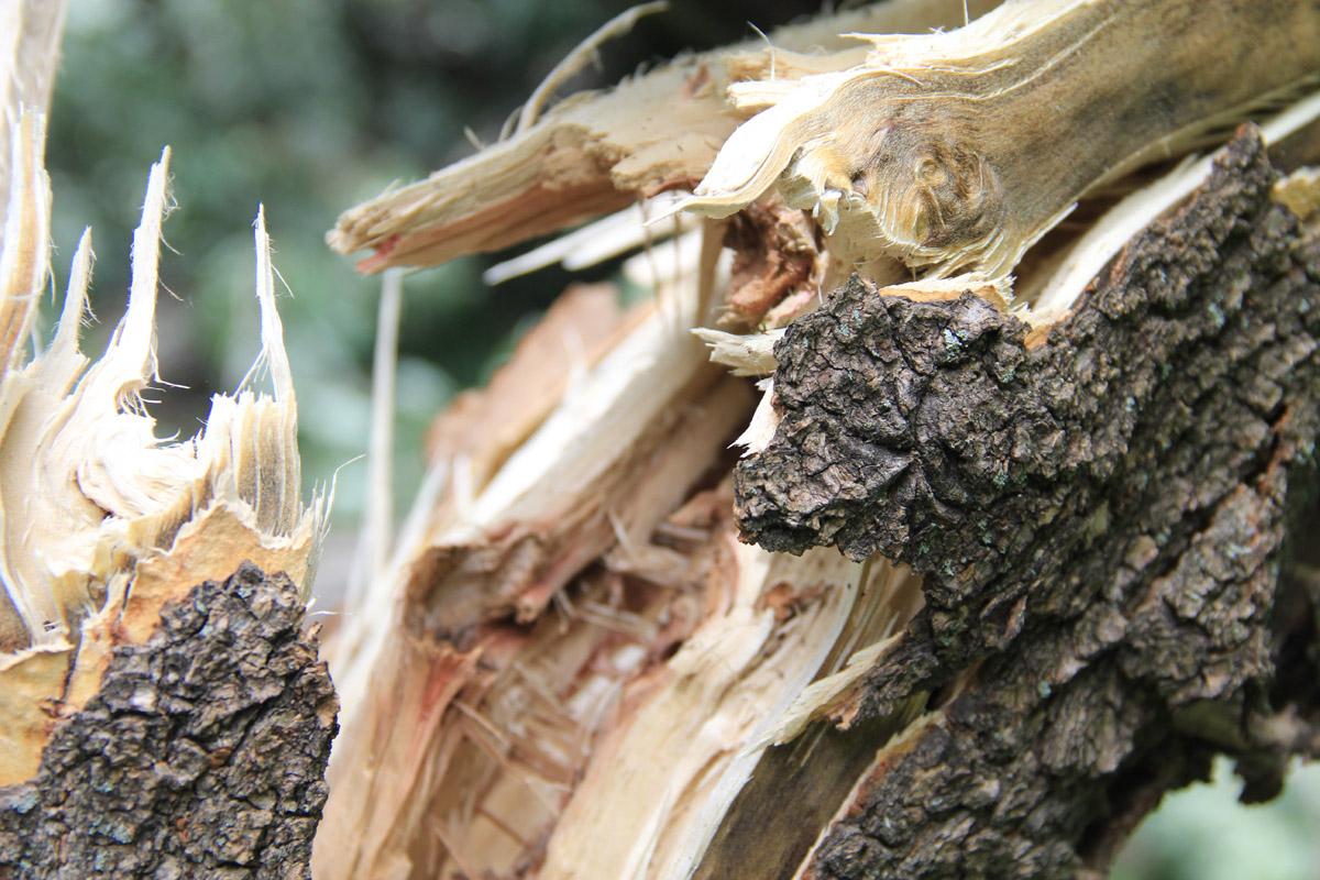 Под Навлей легковушка влетела в дерево: водитель погиб, ранен подросток
