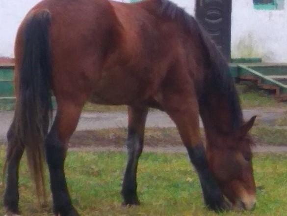 Заблудших лошадей нашли возле Белобережского монастыря