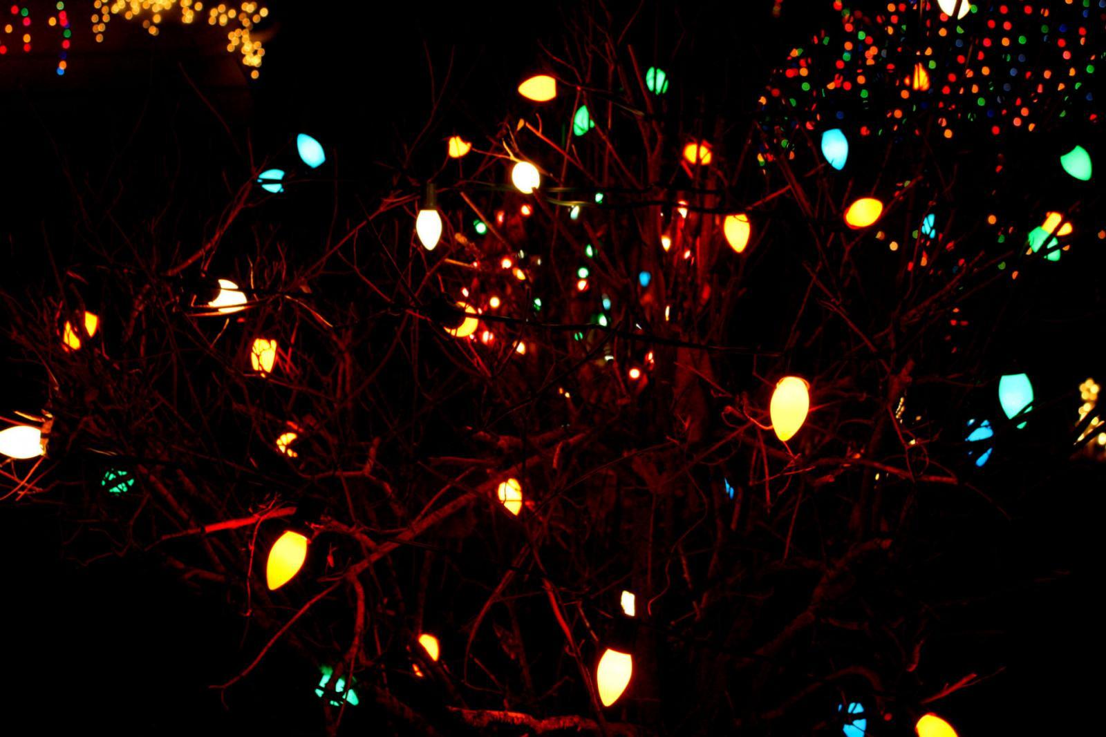 В Брянске зажгли главную новогоднюю ель