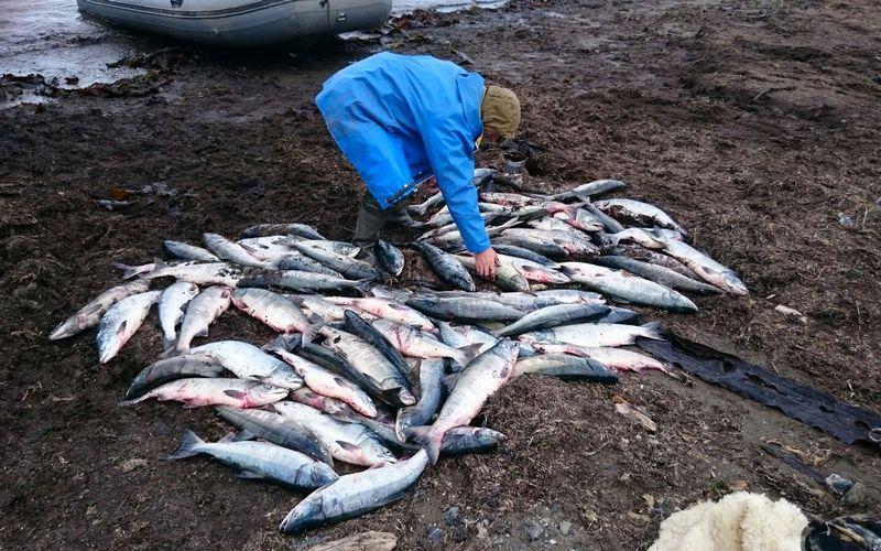 Процветающее браконьерство усмирят невиданными штрафами