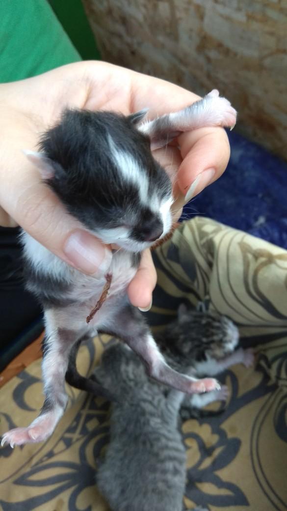 Пакет с живыми котятами достали из болота в Белых Берегах