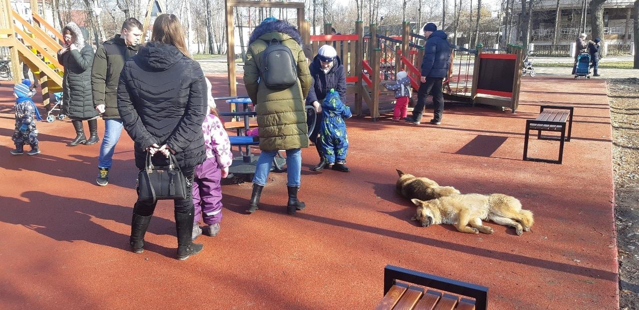 Даже спящими бездомные собаки раздражают брянцев в Майском парке