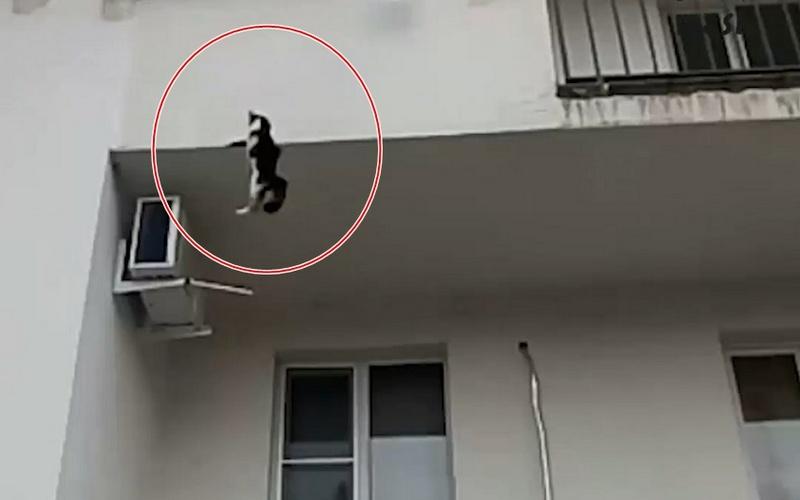 Это видео спасения падающей смногоэтажки кошки взволнует каждого!
