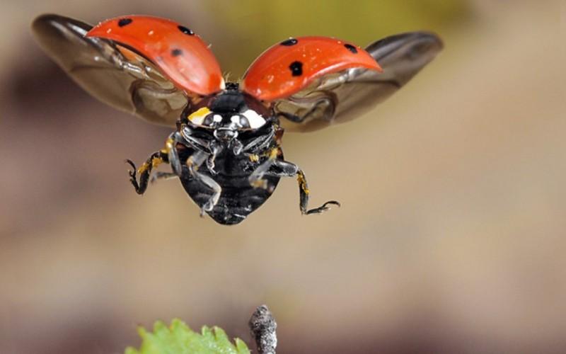 ВЕвропе сгинули три четверти всех летающих насекомых