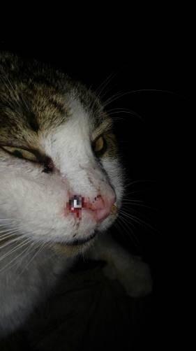 В Карачеве ранили кота из пневмата