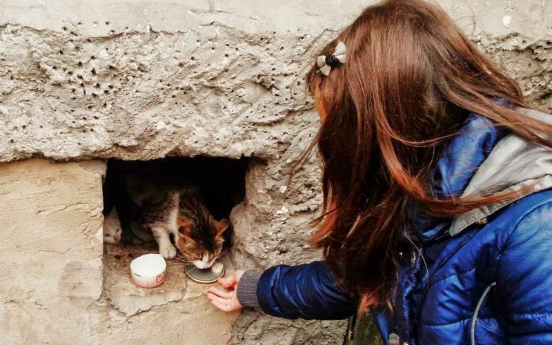 Пес сними: за кормежку бездомных животных грозят ввести штрафы