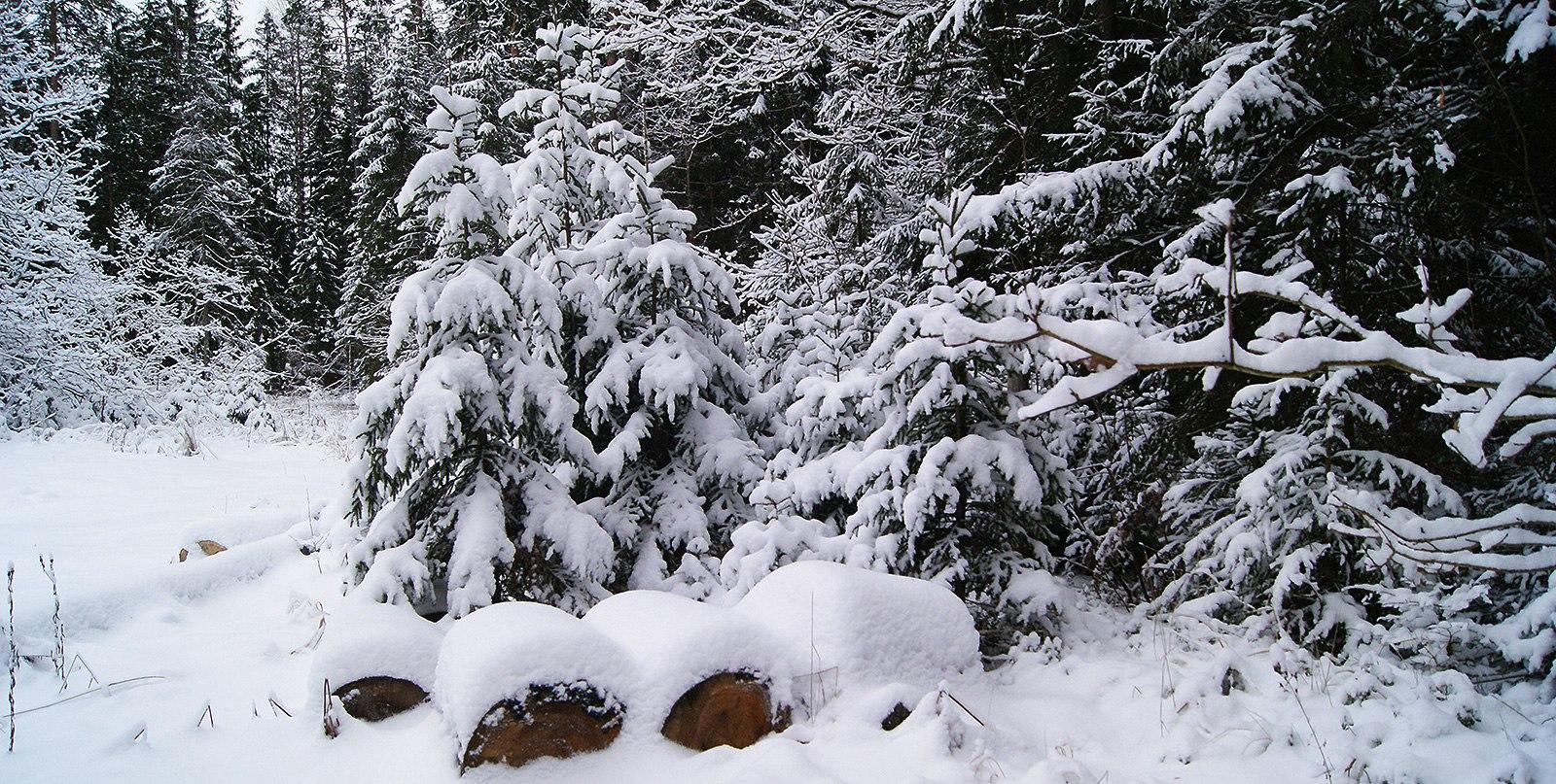 СОЦСЕТИ: Рано похолодало или поздно потеплело вБрянске
