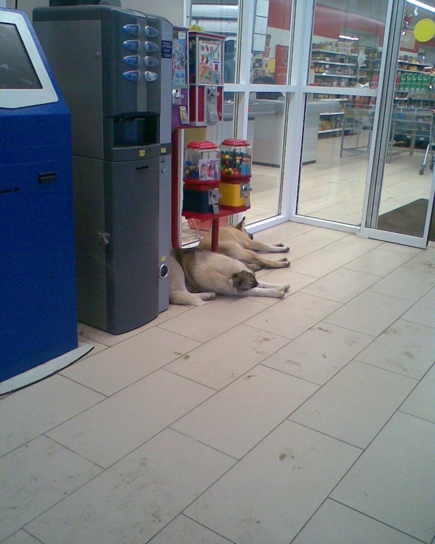 Бездомные псы облюбовали брянский «Магнит»